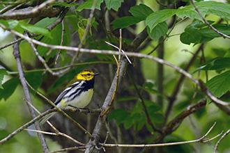 Birding |> Northwest Illinois Audubon Society